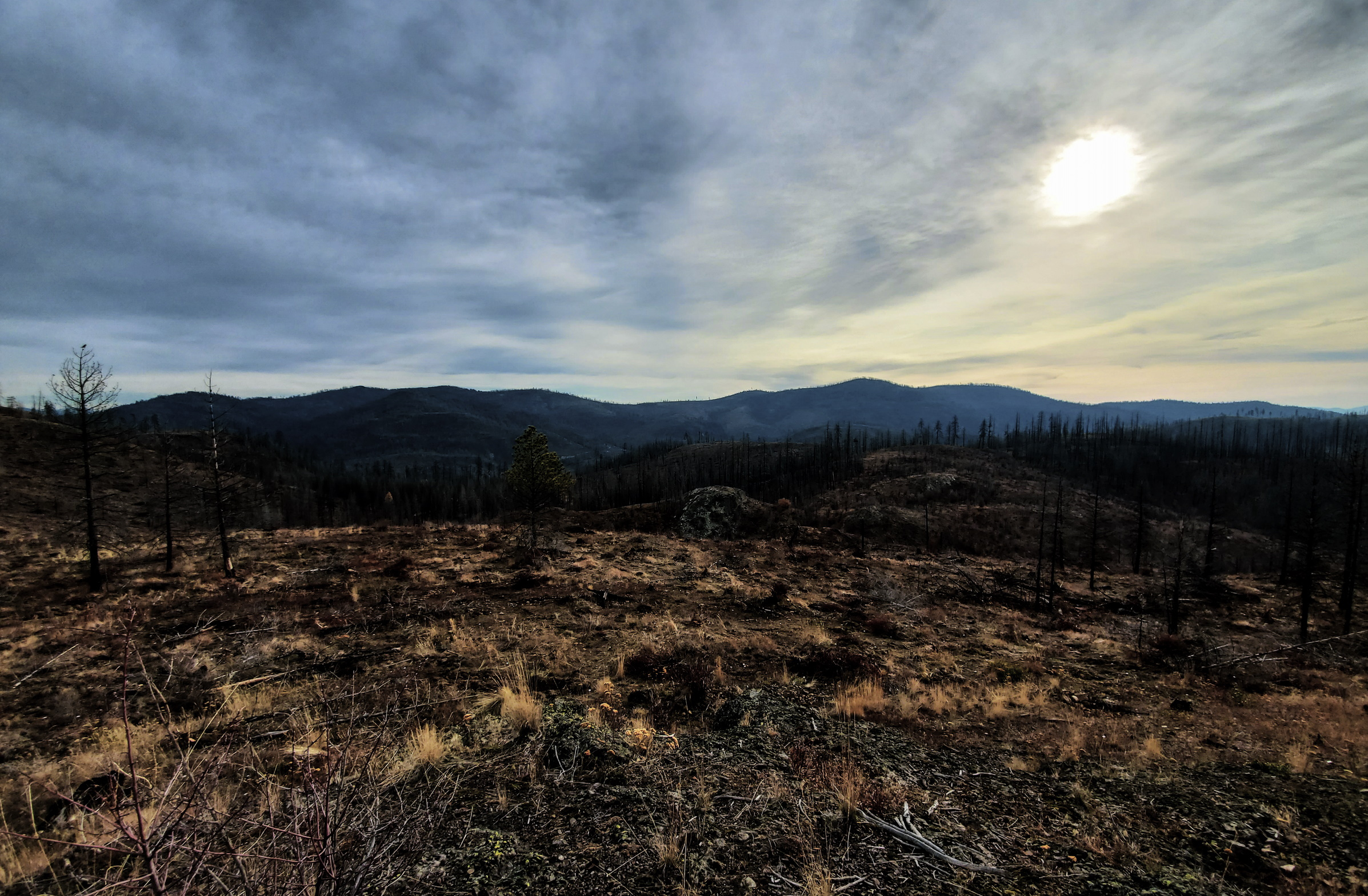 The aftermath of a wildfire, clearing an area of trees.